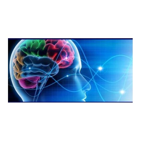 Fundamentos de Neuropsicología (Curso on-line)